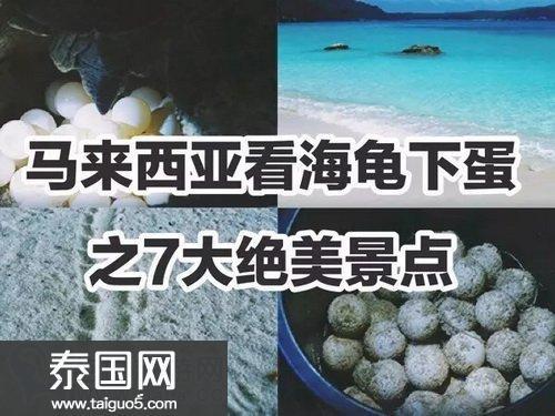 马来西亚海龟下蛋聚集的7大绝美